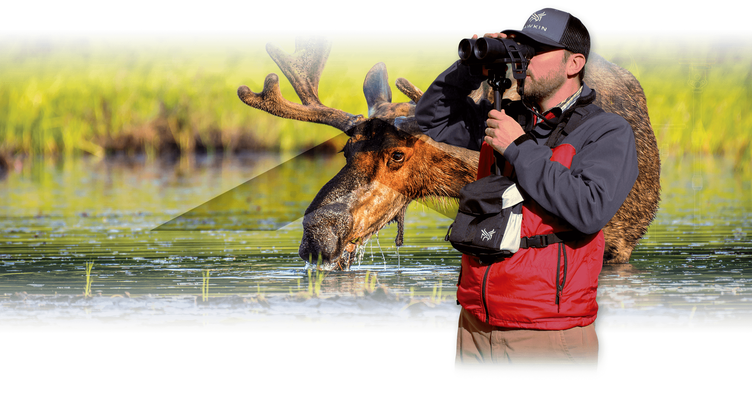 Homepage slide for Hawkin Wildlife - Billings, Montana